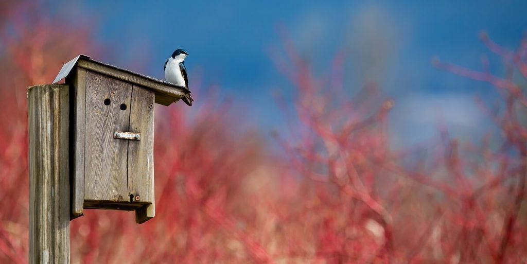bird over birdhouse