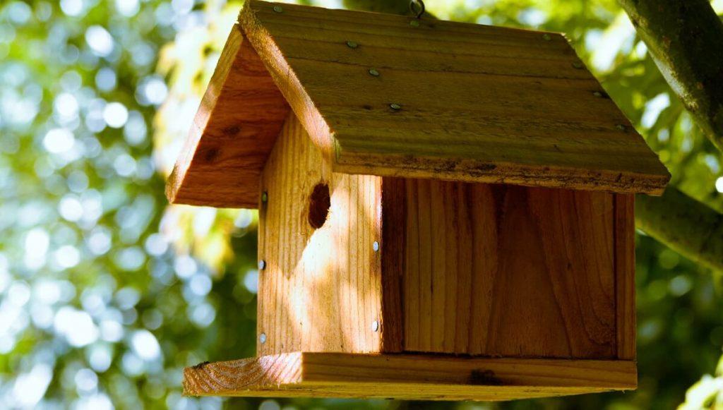 best wood for birdhouse